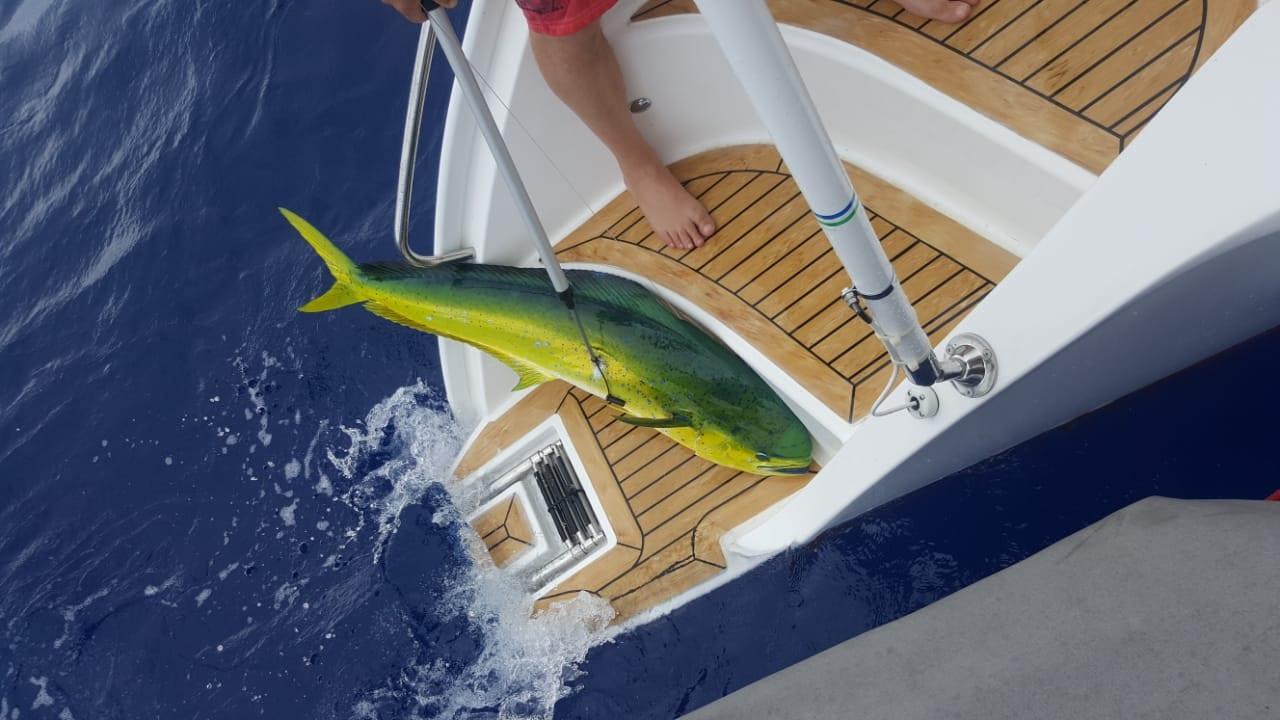 Antares 44 GS Seahorse catches fish